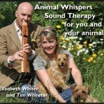Animal Whispers CD Cover